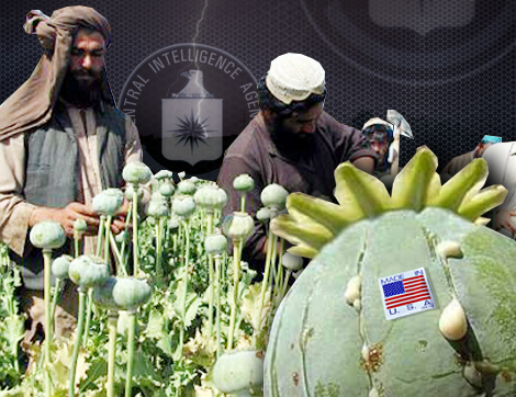 Afghan poppy farmers extract raw opium from poppy heads in fields in Zhera disrict west of Kandahar